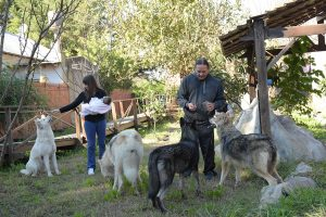 lobos en familia 01
